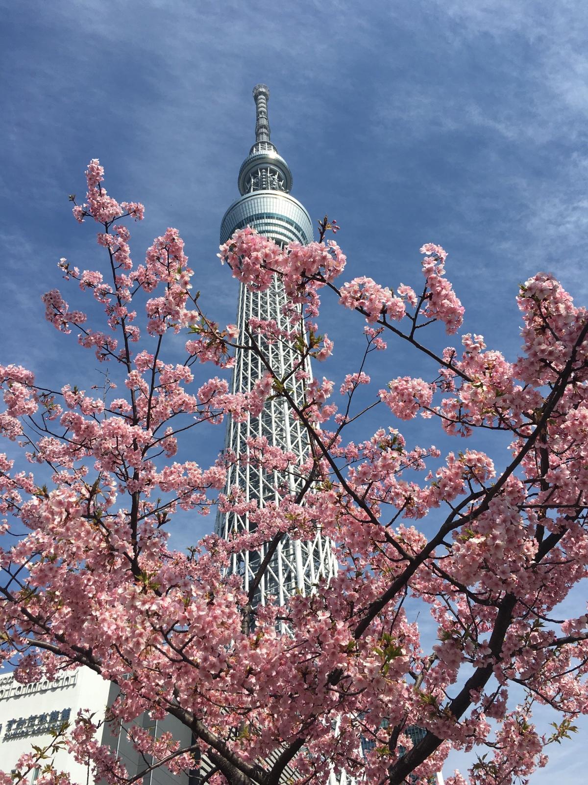 Skytree Em Tokyo